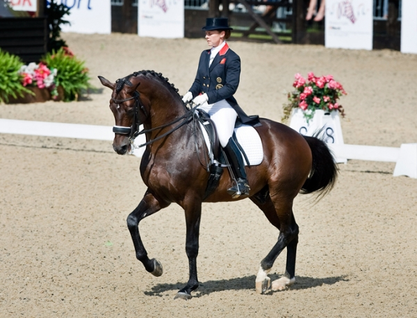Dressage Chevalnièvre